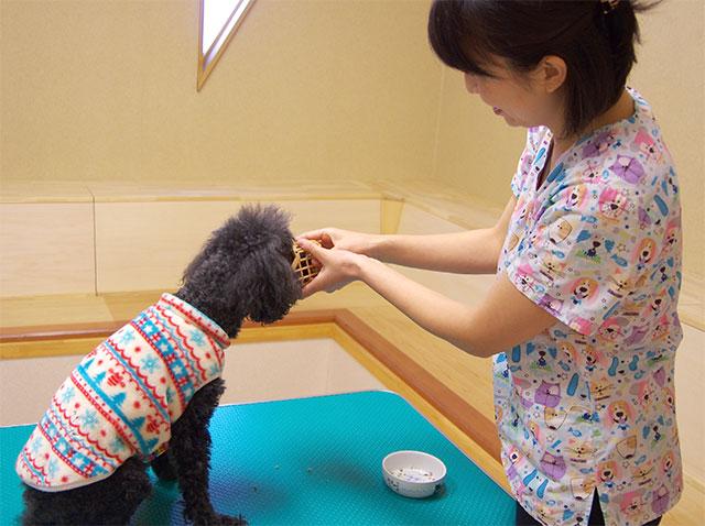 動物行動診療科について